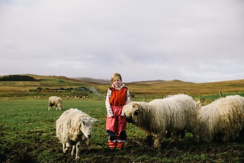Annie and her sheep shetlands